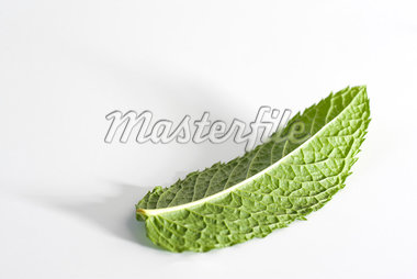 Mint leaf Stock Photo - Premium Royalty-Freenull, Code: 695-05771485