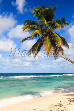 Coconut Palm at Anse Parnel, Mahe, Seychelles Stock Photo - Premium Royalty-Free, Artist: F. Lukasseck, Code: 600-05786219