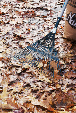 Autumn Leaves, Rake and Yard Waste Bag Stock Photo - Premium Royalty-Free, Artist: Andrew Kolb, Code: 600-05803160