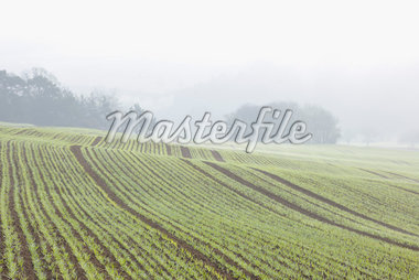 Sowed Field in Early Spring, Franconia, Bavaria, Germany Stock Photo - Premium Royalty-Free, Artist: Raimund Linke, Code: 600-05803190