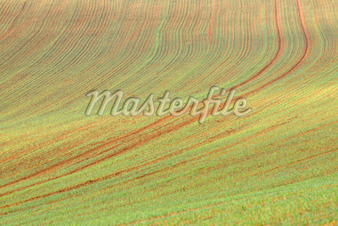 Sowed Field in Early Spring, Franconia, Bavaria, Germany Stock Photo - Premium Royalty-Free, Artist: Raimund Linke, Code: 600-05803191