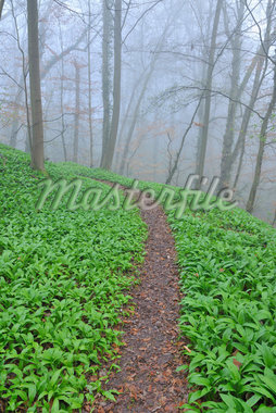 Path through Misty Forest in Early Spring, Triefenstein, Franconia, Bavaria, Germany Stock Photo - Premium Royalty-Free, Artist: Raimund Linke, Code: 600-05803206