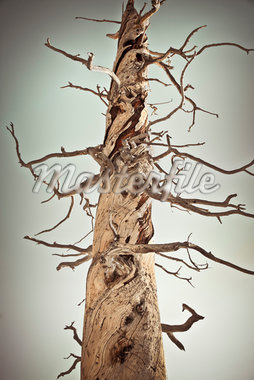 Dead Tree Trunk, Bryce Canyon National Park, Utah, USA Stock Photo - Premium Royalty-Free, Artist: Mark Peter Drolet, Code: 600-05822084