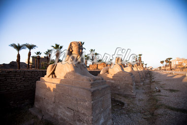 Sphinx at Luxor Temple, Luxor, Egypt Stock Photo - Premium Rights-Managed, Artist: Ikonica, Code: 700-05822134
