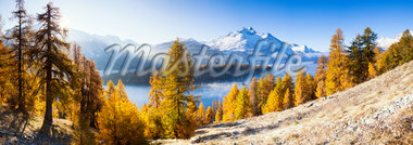 Larch Trees by Lake Sils and Piz de la Margna, Engadin, Switzerland Stock Photo - Premium Royalty-Free, Artist: F. Lukasseck, Code: 600-05837576