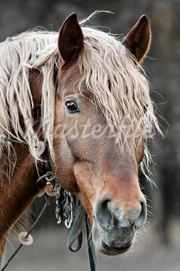 A beautiful horse in the countryside Stock Photo - Royalty-Free, Artist: goinyk                        , Code: 400-05878300