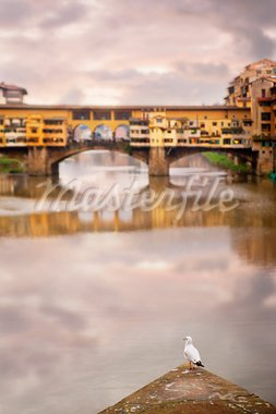 Lone seagull in Florence with Ponte Vecchio in background Stock Photo - Royalty-Free, Artist: PinkBadger                    , Code: 400-05881750