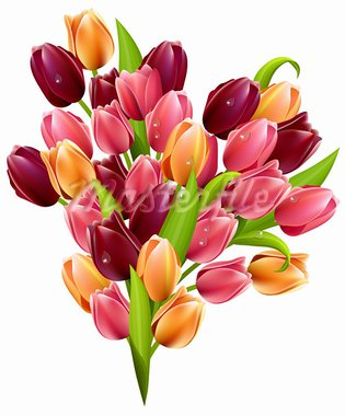Bunch of tulips  isolated on white background Stock Photo - Royalty-Free, Artist: nurrka                        , Code: 400-05882348