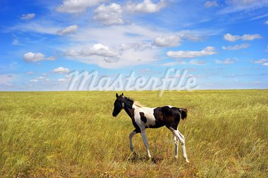 Lonely foal in the field. Crimea, Ukraine Stock Photo - Royalty-Free, Artist: joyt                          , Code: 400-05896438