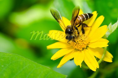 bee in green nature or in the garden Stock Photo - Royalty-Free, Artist: SweetCrisis                   , Code: 400-05899952