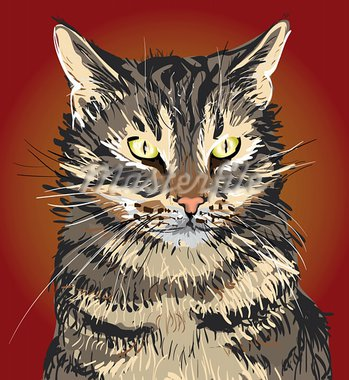 Serious Cat portrait Stock Photo - Royalty-Free, Artist: tkgraphicdesign               , Code: 400-05906662