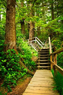 Path through temperate rain forest. Pacific Rim National Park, British Columbia Canada Stock Photo - Royalty-Free, Artist: Elenathewise                  , Code: 400-05910842
