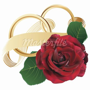Golden wedding rings with ribbon and red rose - fully editable vectors   Stock Photo - Royalty-Free, Artist: Laurine                       , Code: 400-05914102