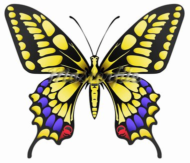 vector illustration of big yellow machaon butterfly isolated on white Stock Photo - Royalty-Free, Artist: anyamantis                    , Code: 400-05920390