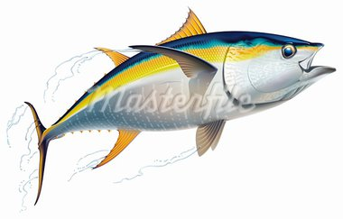 Yellowfin tuna in fast motion. Realistic vector illustration. Stock Photo - Royalty-Free, Artist: artefy                        , Code: 400-05946755