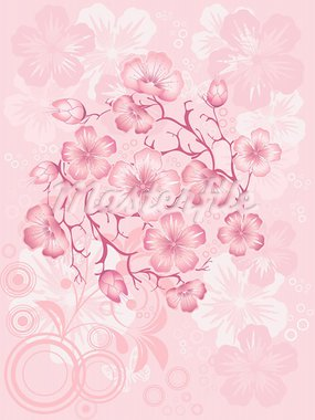 sakura  blossom, vector illustration Stock Photo - Royalty-Free, Artist: shmel                         , Code: 400-05946867
