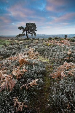 Hoar frost during winter in the New Forest, Hampshire, England, United Kingdom, Europe Stock Photo - Premium Rights-Managed, Artist: Robert Harding Images, Code: 841-05962072