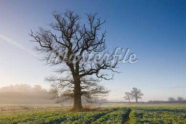 Misty winter morning in farmland near Wimborne, Dorset, England, United Kingdom, Europe Stock Photo - Premium Rights-Managed, Artist: Robert Harding Images, Code: 841-05962422