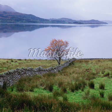 Tree growing near stone wall in rural landscape Stock Photo - Premium Royalty-Freenull, Code: 635-05972706