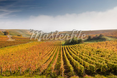 The vineyards of Sancerre during a heavy autumn mist, Cher, Centre, France, Europe Stock Photo - Premium Rights-Managed, Artist: Robert Harding Images, Code: 841-06034331
