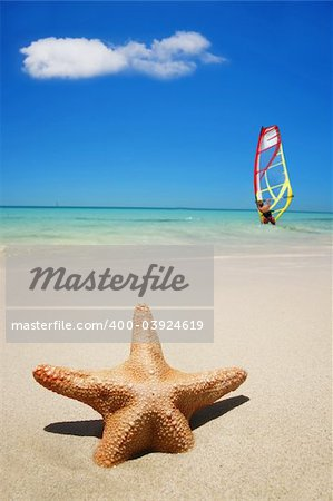 Starfish on the beach with windsurfer