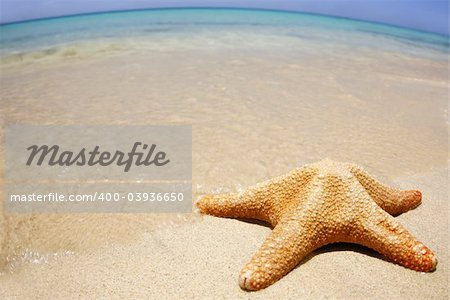 Starfish on the beach with wide-angle distorted horizon