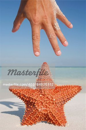 A play on the similaritybetween a starfish and a hand, taken on a tropical beach