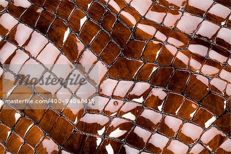 Snakeskin texture - leather background Stock Photo - Budget Royalty-Free, Image code: 400-04068413