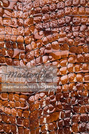 Snakeskin texture - leather background Stock Photo - Budget Royalty-Free, Image code: 400-04068414