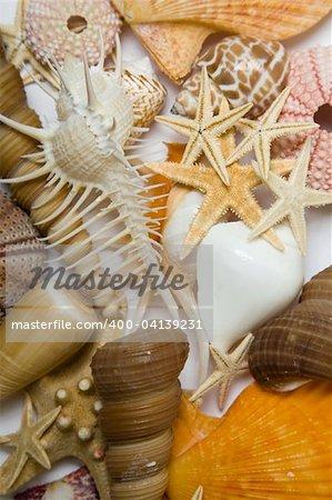 Assorted seashell background shot in high key