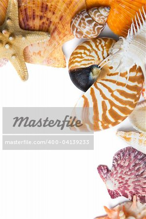 Assorted seashell background shot in high key with a nautilus