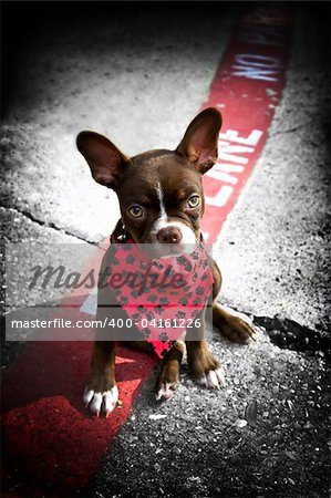 Image of a cute puppy wearing a red bandana sitting on a fire lane Stock Photo - Budget Royalty-Free, Image code: 400-04161226