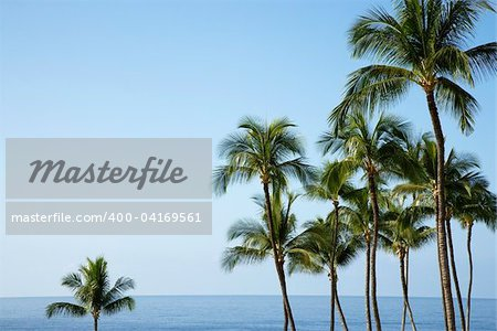 Palm trees with the ocean horizon in the distance. The sky is clear and blue. Horizontal shot.