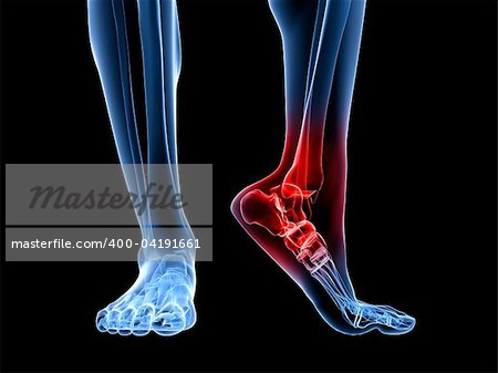 3d rendered illustration of a skeletal foot with highlighted ankle Stock Photo - Budget Royalty-Free, Image code: 400-04191661