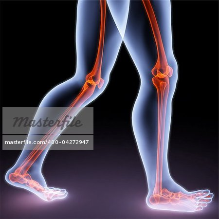 feet walking person under X-rays. bones are highlighted in red. Stock Photo - Budget Royalty-Free, Image code: 400-04272947