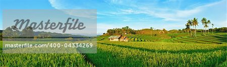 Panorama of the paddy rice field. Philippines Stock Photo - Budget Royalty-Free, Image code: 400-04334269