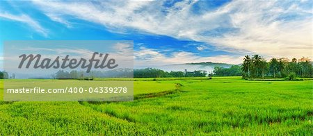 Panorama of the paddy rice field. Philippines Stock Photo - Budget Royalty-Free, Image code: 400-04339278