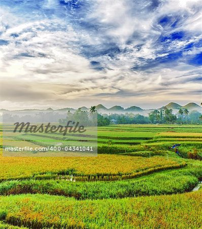 Panorama of the paddy rice field. Philippines Stock Photo - Budget Royalty-Free, Image code: 400-04341041