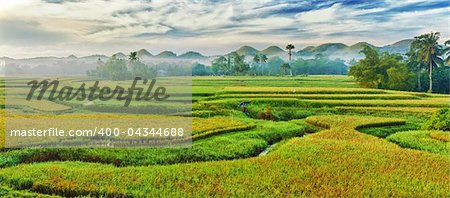 Panorama of the paddy rice field. Philippines Stock Photo - Budget Royalty-Free, Image code: 400-04344688