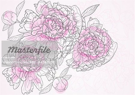 Vector illustration of beautiful floral background with pink peonies