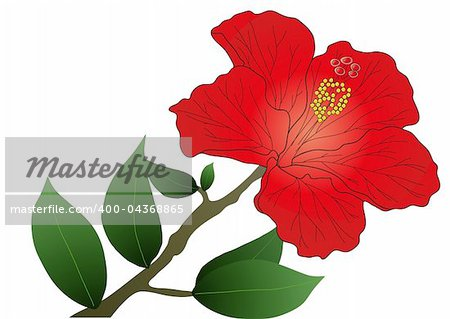 Vector illustration of red hibiscus flower with leaves