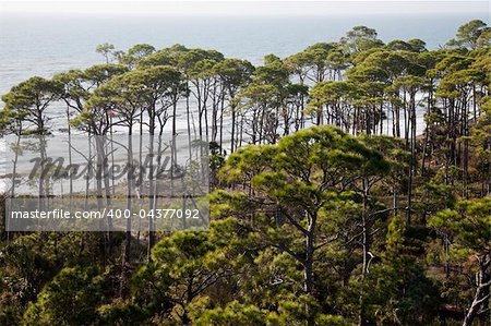 Forest by the sea - Florida, Gulf of Mexico Stock Photo - Budget Royalty-Free, Image code: 400-04377092