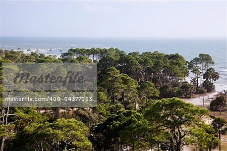 Forest by the sea - Florida, Gulf of Mexico Stock Photo - Budget Royalty-Free, Image code: 400-04377093