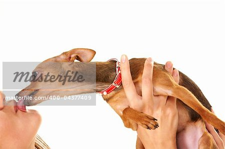 Close-up of small dog in female hands licking its owner Stock Photo - Budget Royalty-Free, Image code: 400-04377409