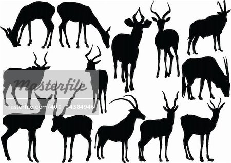 antelopes collection - vector Stock Photo - Budget Royalty-Free, Image code: 400-04384946