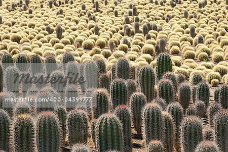 Farm producing a wealth of different cactus species Stock Photo - Budget Royalty-Free, Image code: 400-04399777