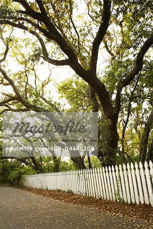 White picket fence with trees. Stock Photo - Budget Royalty-Free, Image code: 400-04448308