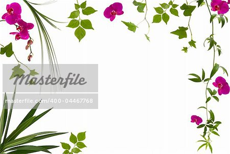 Beautiful floral frame with different leaves and orchids Stock Photo - Budget Royalty-Free, Image code: 400-04467768