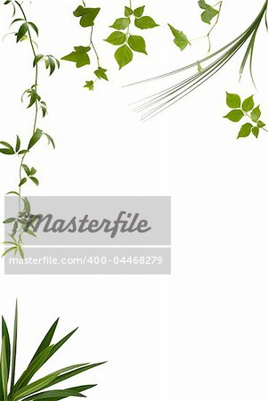 Different kinds of leaves with copy space Stock Photo - Budget Royalty-Free, Image code: 400-04468279
