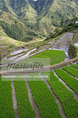 rice terraces in northern luzon the philippines Stock Photo - Budget Royalty-Free, Image code: 400-04508990